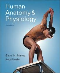 human anatomy and physiology pdf download