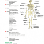 Download Anatomy Notes Pdf Free + Notes Features