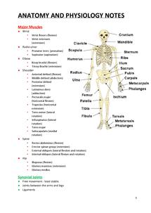 anatomy notes pdf